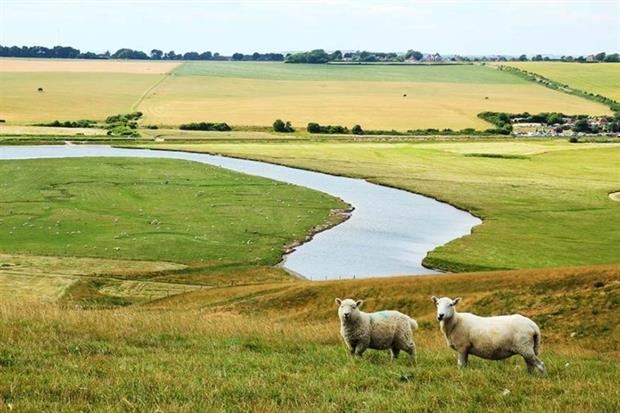 Livestock should be kept clear of watercourses (photograph: Martin Kunzel/123RF)