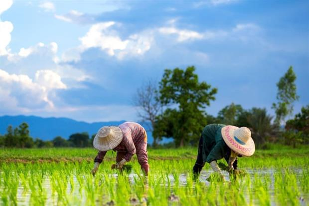 Rice demand is projected to double by 2050(photograph: Chatrawee Wiratgasem/123RF)