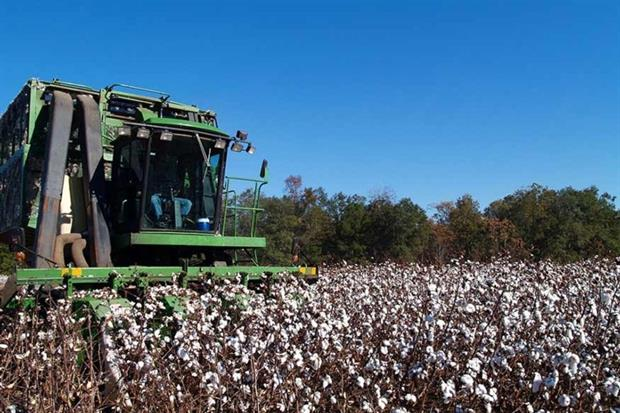 Cotton accounts for more than 3% of water consumed globally for crop production (photograph: lindasj2/123RF)