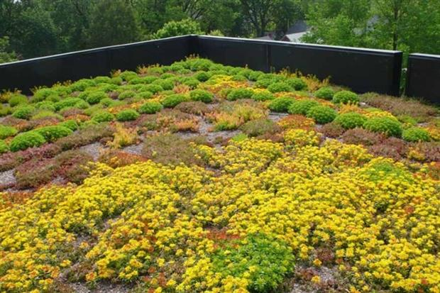 Green roofs can attenuate rainwater  Photograph: Arlington County, CC BY-SA 2.0