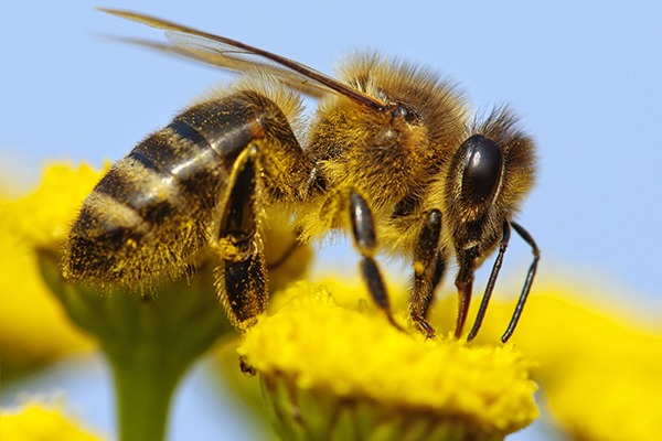 Pollinator numbers are in decline. Photograph: Daniel Prudek/123RF