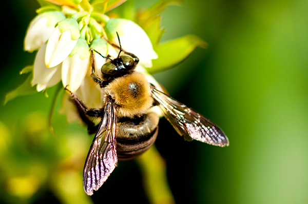 Pollinators in particular are suffering. Photograph: Betty Shelton/123RF