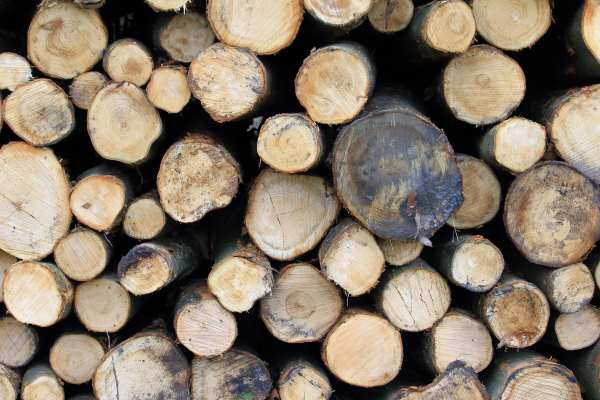 CPET advised on the sustainability of timber, wood fuel and palm oil. Photograph: Martin Heinrich Nagel /123rf