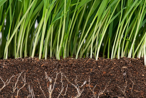 Soils are about to receive more policy attention. Photograph: Anastasiia Prokofyeva/123RF