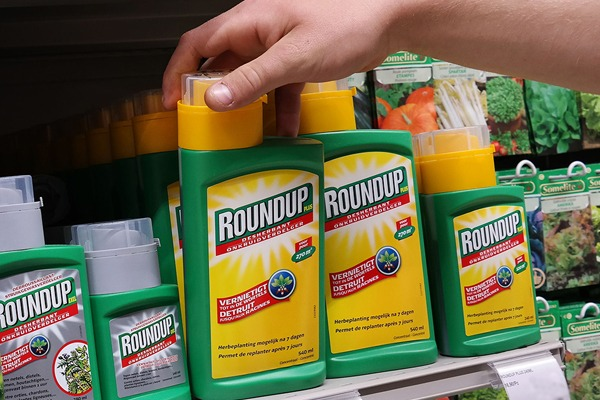 EU member states have been unable to reach a decision on glyphosate, following differing advice on its carcinogenicity. Photograph: Rene Van Den Berg/123RF