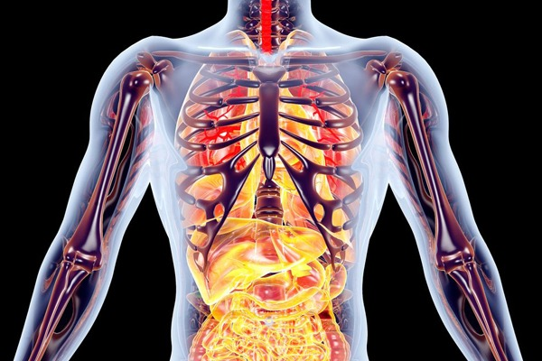Endocrine disrupting chemicals can affect most aspects of human physiology. Image: Spectral/123RF