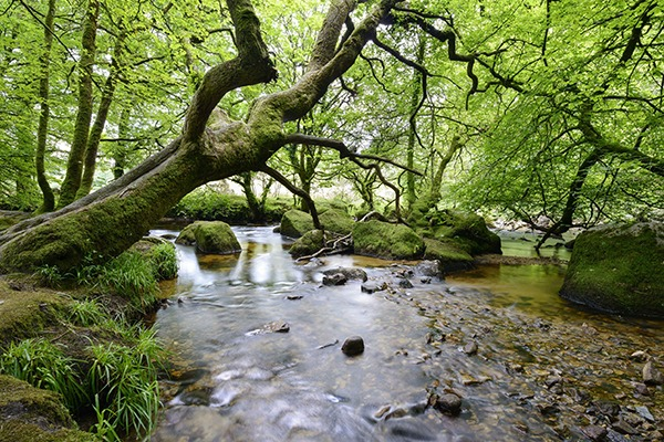 The committee will look at whether ancient woodland has sufficient protection. Photograph: Helen Hotson/123RF