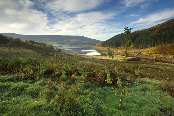 RSPB Dovestone, memorial wood in Derbyshire. Photo: Ben Hall, RSPB