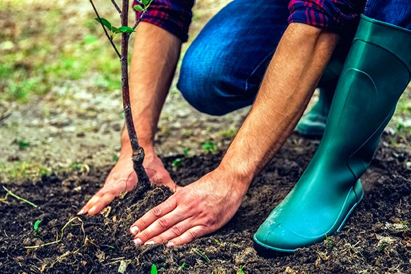 Natural flood management includes measures such as tree planting. Photograph: gstockstudio/123RF