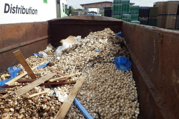 Mushrooms in a skip at Walsh Mushrooms site in Evesham. Photo: Environment Agency