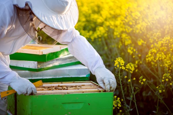 Farmers and campaigners are split on the impact neonicotinoids have on bees. Photograph: Bernard Bodo / 123RF
