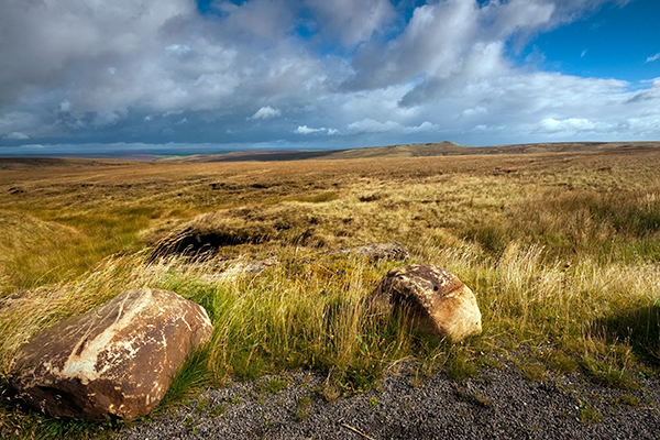 Peatlands make up 11% of England's landscape. Photograph: Shahid Khan/123RF