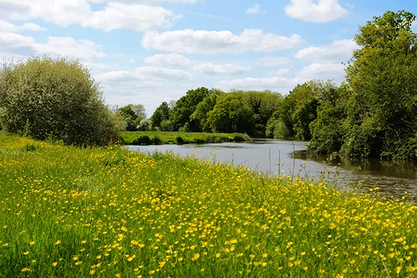The River Medway. Photograph: Sarah Marchant/123RF