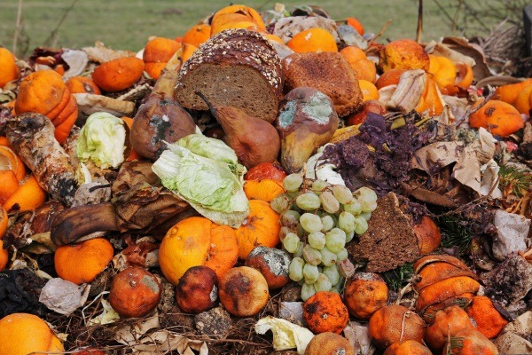Domestic food waste across UK is on the rise. Photograph: Astrid Gast