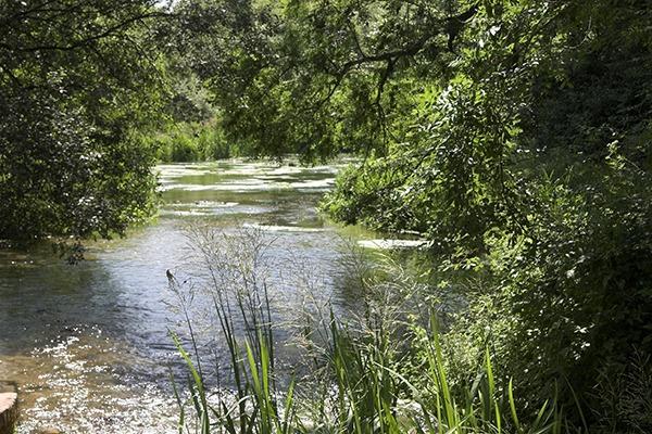 River Itchen at Ovington. Photograph: Ian Pitt/123RF
