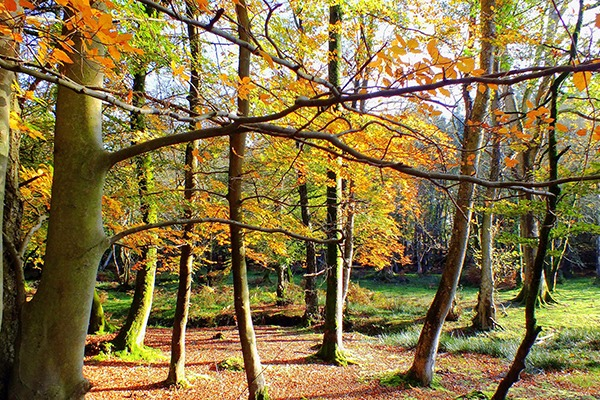 Woodlands are good at removing particulate matter. Photograph: Helen Hotson/123RF