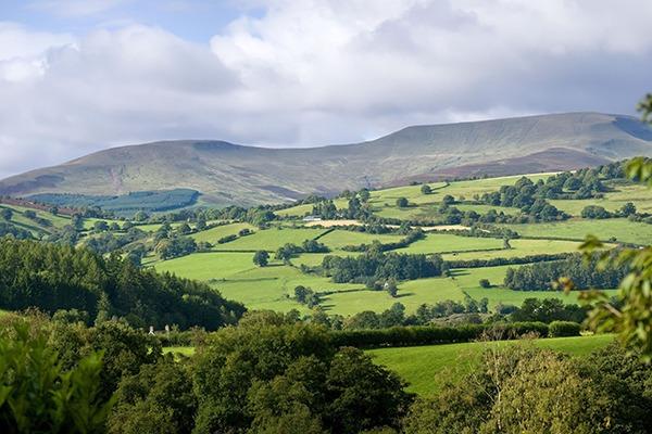 The Glastir scheme is leading to environmental improvements. Photograph: David Martyn Hughes/123RF