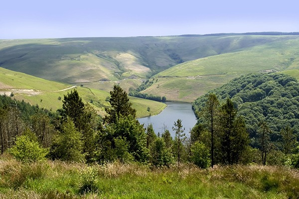Commercial forestry could help Wales meet its woodland goals. Photograph: David Martyn Hughes/123RF
