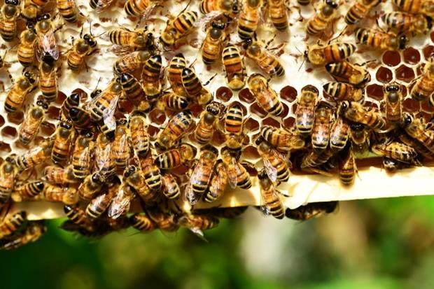 Show me the honey - EFSA in search for expert guidance. Photograph: Pixabay