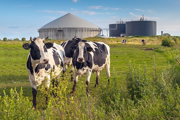 Further delay to the RHI reforms risks further disruption to the biogas industry. Photograph: Rudmer Zwerver/123RF