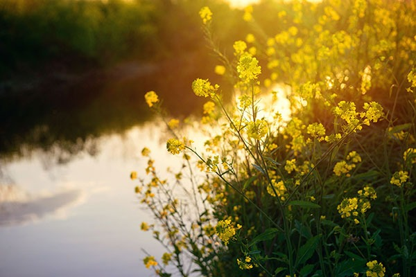 Neonicotinoid pesticides have been found in rivers. Photograph: 123RF