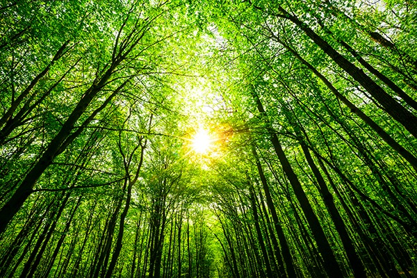 Forest. Photograph: Volodimir Kalina/123RF