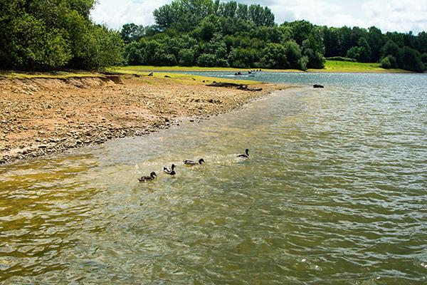 Bewl Water reservoir, Kent