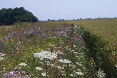 Set-aside land for wildlife haven, Duncan Westbury
