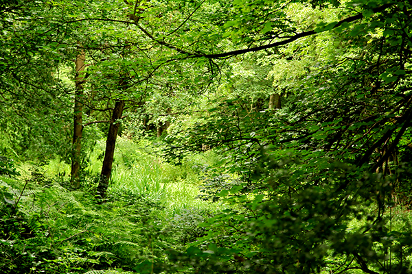 Carr Wood wildlife site, Derbyshire