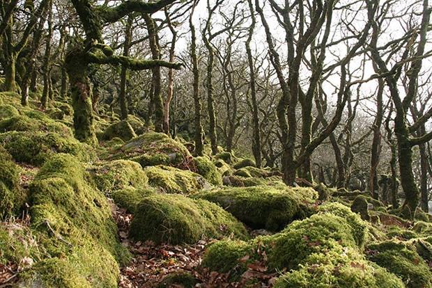 Dartmoor Forest