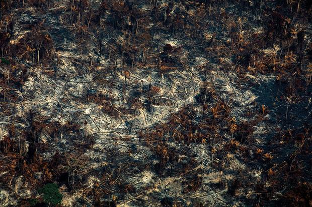 Deforestation in Nascentes da Serra do Cachimbo Biological Reserve in Altamira, Pará state, Brazil, in the Amazon basin, on August 28, 2019. Photograph: Joao Laet/AFP via Getty Images