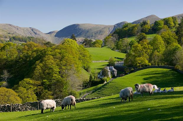 Trade deals should not undermine the UK's green standards, say farmers and green groups. Photograph: Tonywestphoto/Getty Images