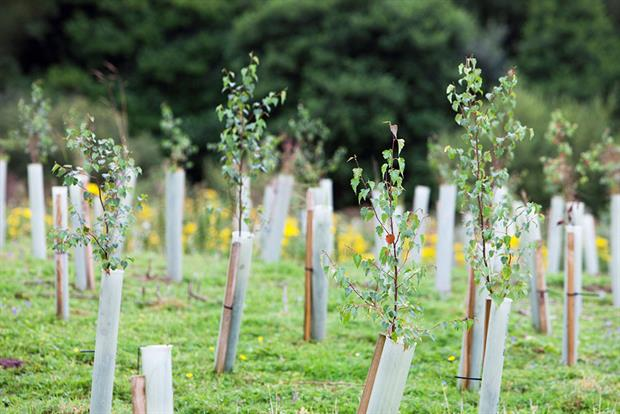 Tree planting: the government has committed £640m to fund the restoration of the natural world. Photograph: Construction Photography/Avalon/Getty Images
