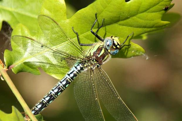 Biodiversity: MPs highlight government policy failings (Photograph: jans canon, CC BY 2.0, Flickr)
