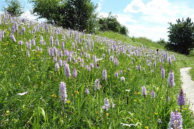 The Roadside Nature Reserve before the drainage works (images copyright Dave Watson, Kent Wildlife Trust)
