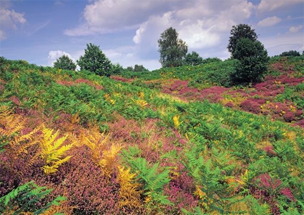 Puttenham Heath, Surrey. Taken by Ernie Janes/ Alamy