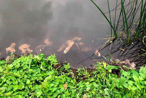 Carcasses in the river Thet. Photograph: Chris Sharpe via Twitter