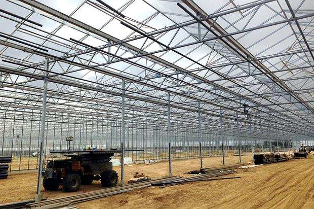 Neame Lea: glasshouse development includes irrigation, control logistics, screens, heating and overhead stackers (HW)