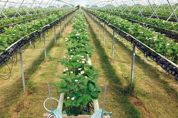 H2CoCo: helps improve water, fertiliser and labour efficiency in coir-grown crops - image: Cocogreen