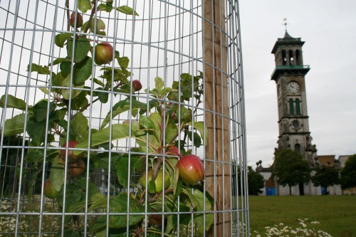 New orchard in Caledonian Park, North London - image:HW