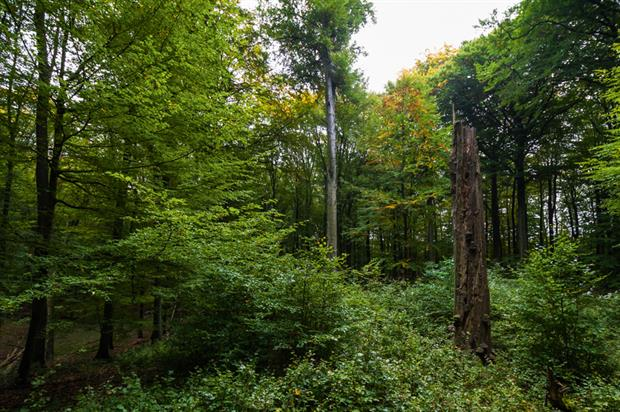 Ancient woodland:sites across north-west Germany used as a model