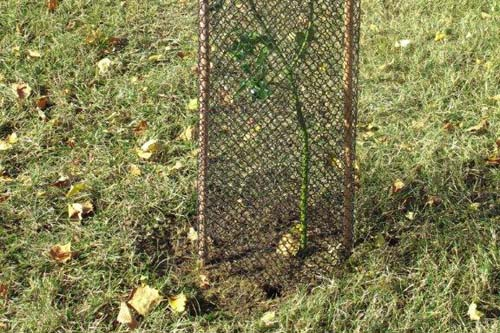 Bio Protectenet is a 100% bio-degradable mesh guard - image: Amenity Land Solutions