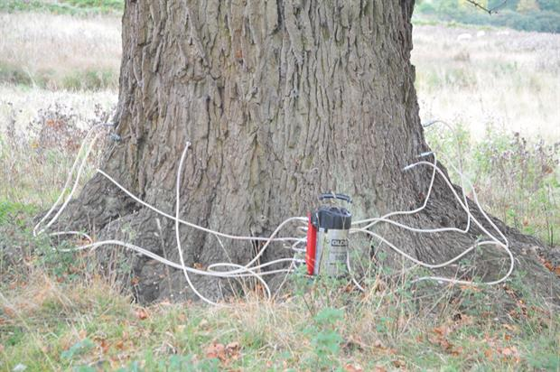 Treatment: garlic-derived compound injected to fight tree diseases