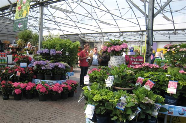 Newlands Home & Garden Centre: colourful bedding attracted sales