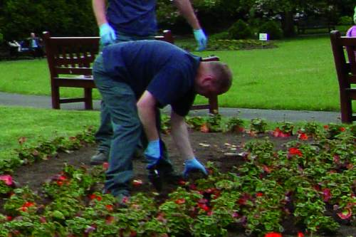 Local authority demand for bedding for park planting expected - image: HW