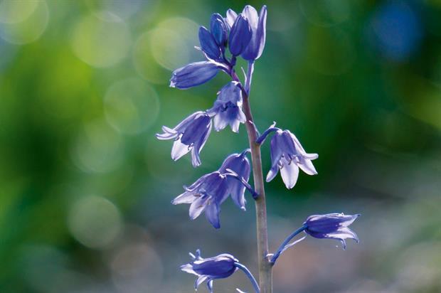 Key plants: identification skills - image: Flickr/Martin Kenny