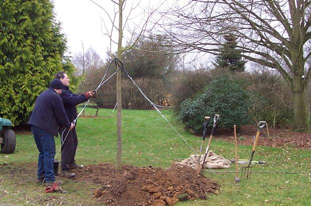 Hillier Nurseries: firm boasts access to unlimited range of tree sizes