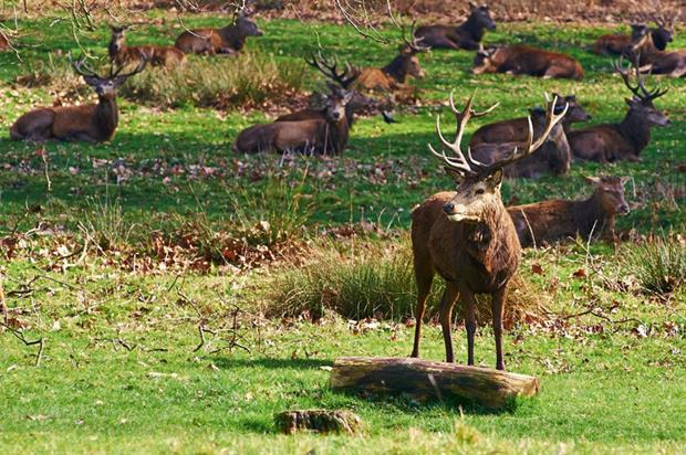 Richmond Park: part of survey