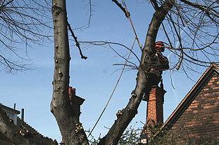 Arboriculturists have seen commercial work decline and expect public sector contracts to go the same way - image: HW