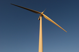 Wind turbines - annual average wind speeds are critical to growers' payback calculations - image: Morguefile